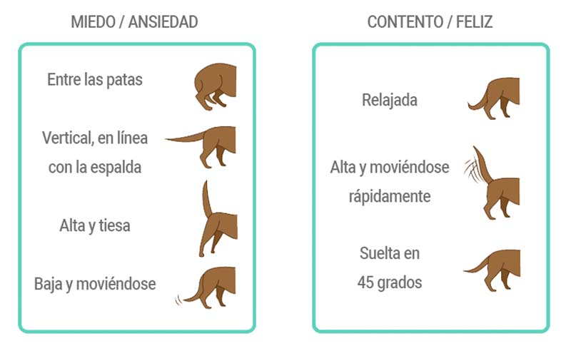 lenguaje cola perro