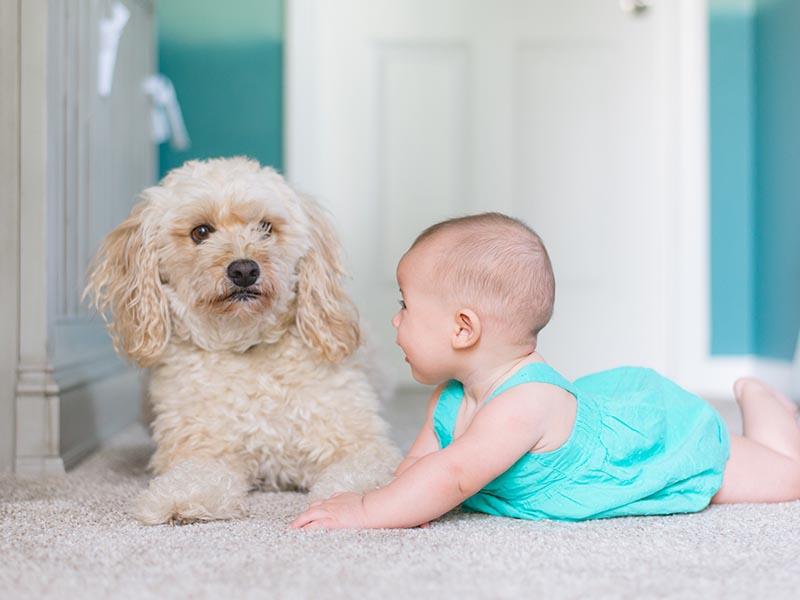 Beneficios niños y mascotas | Wasky