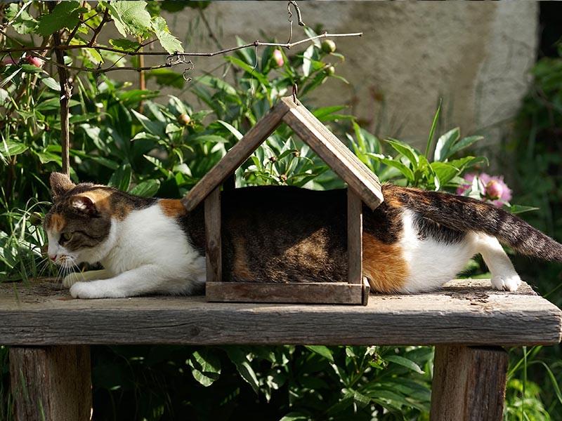 algunos de los comportamientos más extraños de los gatos